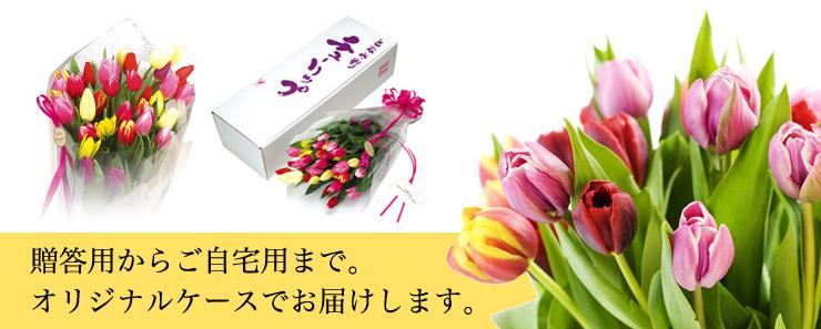 贈答用からご自宅用まで。産地直送のチューリップ切り花を、オリジナルケースでまごころ込めて贈ります。